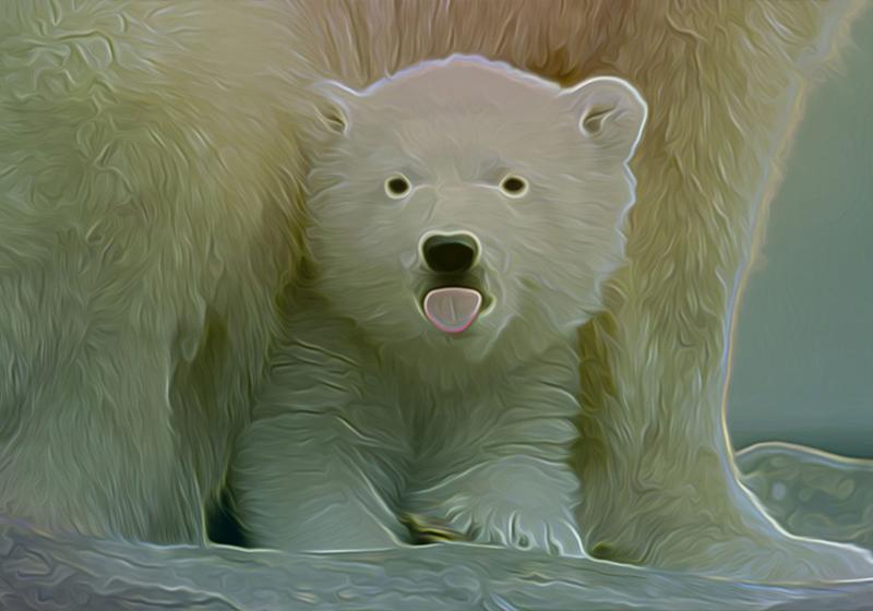 Eisbär Junges Kontur