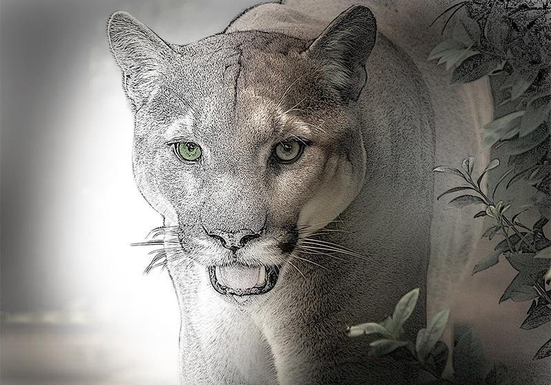 Puma abstrakt